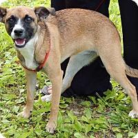 Adopt A Pet :: Robin(16 lb) New Pics & Video - SUSSEX, NJ