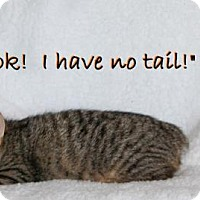 Adopt A Pet :: Lilac - Little Rock, AR