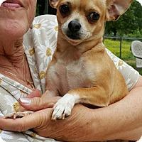 Adopt A Pet :: Fajita - Baileyton, AL