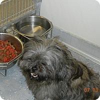 Adopt A Pet :: MILO - Sandusky, OH