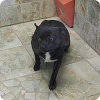 Adopt A Pet :: Lexi - Charlemont, MA