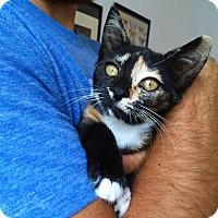 Adopt A Pet :: Delilah - Miami, FL