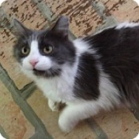 Adopt A Pet :: Mama Mia - McHenry, IL