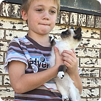 Adopt A Pet :: *THEODORE* - Weatherford, TX