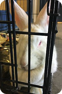 New Zealand Mix for adoption in Lindsay, Ontario - Ygritte