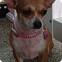 Adopt A Pet :: Lovey - Thousand Oaks, CA