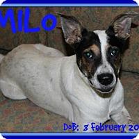 Adopt A Pet :: MILO - Sebec, ME