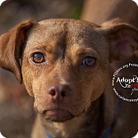 Adopt A Pet :: Junior - East Hartford, CT