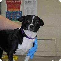 Adopt A Pet :: BETSY - West Palm Beach, FL
