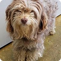 Adopt A Pet :: Eve - Lompoc, CA