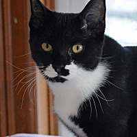 Adopt A Pet :: Jo Jo - Middletown, NY