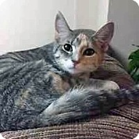 Adopt A Pet :: Leah - Mississauga, Ontario, ON