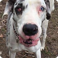 Adopt A Pet :: Daisy - URGENT - Albany, NY