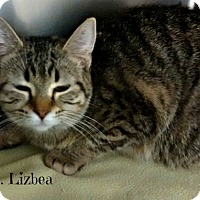Adopt A Pet :: Lizbea - Spring Brook, NY