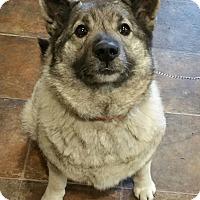 Adopt A Pet :: Bear - Lisbon, OH