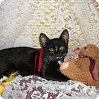 Adopt A Pet :: Mittens - Cypress, TX