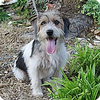Adopt A Pet :: DAISEY - Humboldt, TN