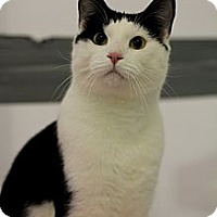 Adopt A Pet :: Twix - Mission, BC