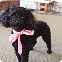 Adopt A Pet :: Phoebe - Tustin, CA