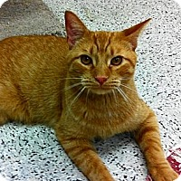 Adopt A Pet :: Devon - Warminster, PA