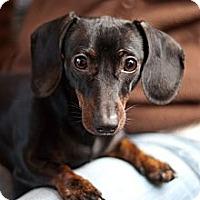 Adopt A Pet :: MYLEE - Portland, OR