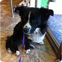 Adopt A Pet :: Marvin - miami beach, FL
