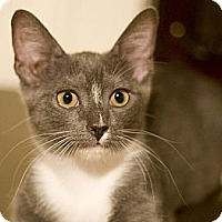 Adopt A Pet :: Moppet - Chicago, IL