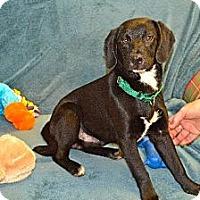 Adopt A Pet :: Copper - Marietta, GA