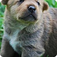 Adopt A Pet :: BRUIN - Torrance, CA