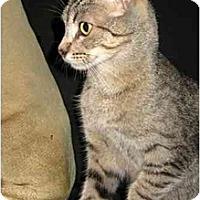 Adopt A Pet :: Scorchy - Davis, CA