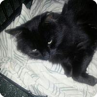 Adopt A Pet :: ZOE - Mahopac, NY