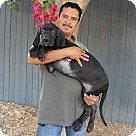 Adopt A Pet :: Velvet