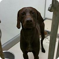 Adopt A Pet :: Oakley - Streetsboro, OH
