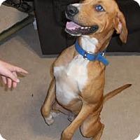 Adopt A Pet :: Jake - Wakefield, RI