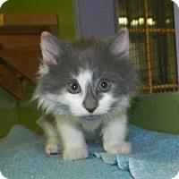 Adopt A Pet :: Wilbur - Dover, OH