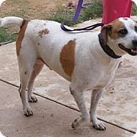 Adopt A Pet :: Buda - Floresville, TX