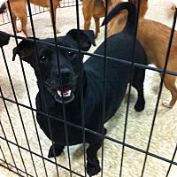 Adopt A Pet :: Timmy - Fowler, CA