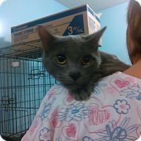 Adopt A Pet :: Rosie Paws - Muskegon, MI