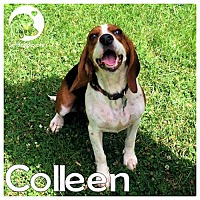 Adopt A Pet :: Colleen - Novi, MI