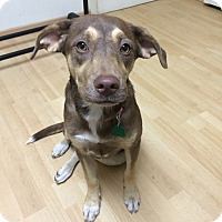 Adopt A Pet :: Posey IN CT - Manchester, CT