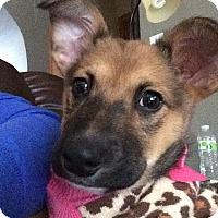 Adopt A Pet :: Millie - Clear Lake, IA