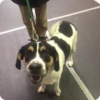 Adopt A Pet :: Wyatt - Colorado Springs, CO