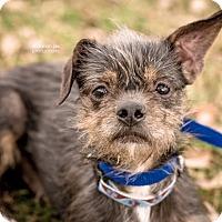 Adopt A Pet :: Tanner - Gainesville, FL