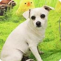 Adopt A Pet :: Bonita - Lincolnton, NC