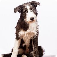 Adopt A Pet :: Charlotte-well-trained!! - Woonsocket, RI