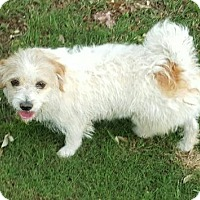 Adopt A Pet :: Wiggles - Helotes, TX