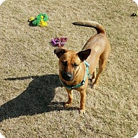 Adopt A Pet :: Charleigh - Uxbridge, MA