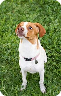 Hound (Unknown Type) Mix Dog for adoption in Summerville, South Carolina - Ethel Mae