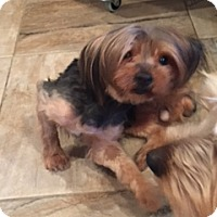 Adopt A Pet :: Phoebe - N. Babylon, NY