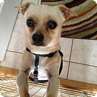 Adopt A Pet :: Speedy-courtesy post - Schaumburg, IL
